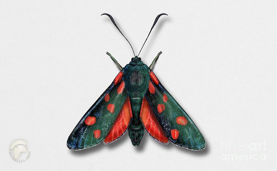 Six Spot Burnet Butterfly - Zygaena Filipendulae Naturalistic Painting - Nettersheim Eifel Painting