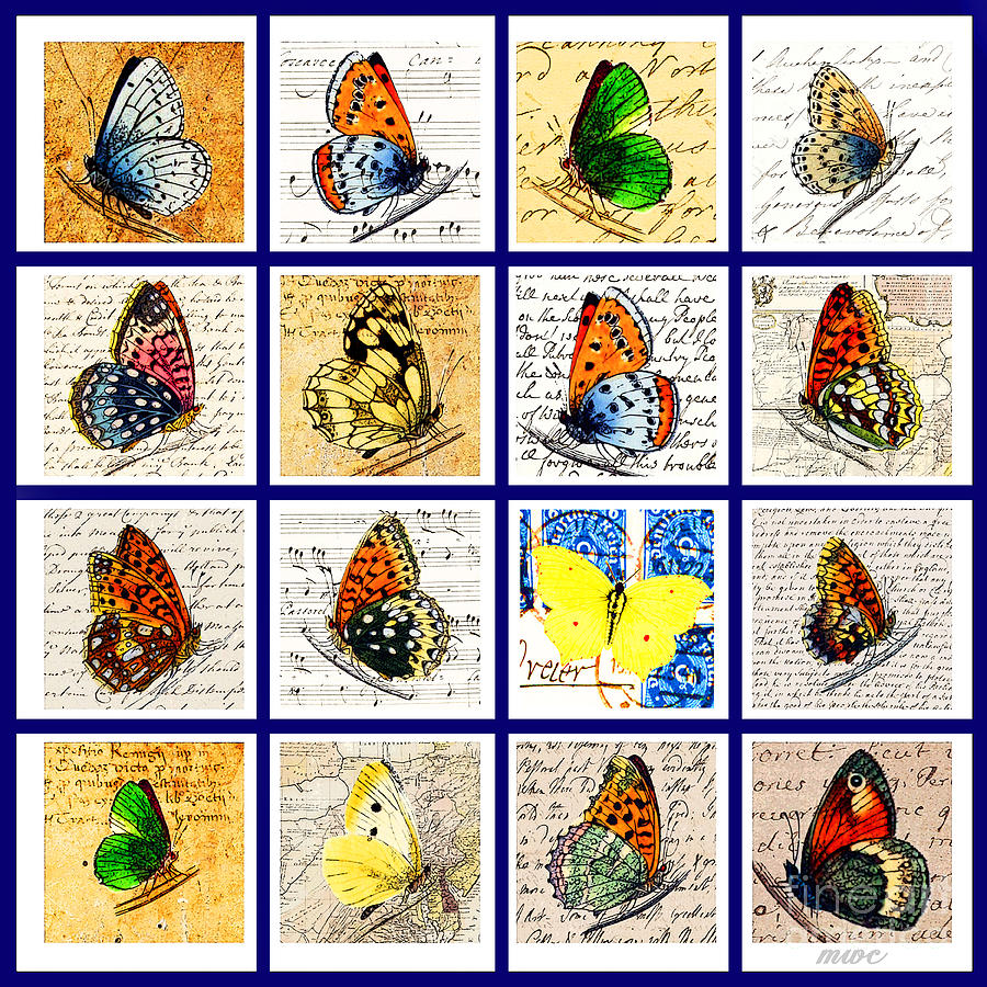 Sixteen Butterflies by Marian Cates