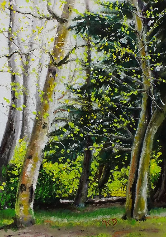 Woods Painting - Skagit Valley Forest by Marie-Claire Dole