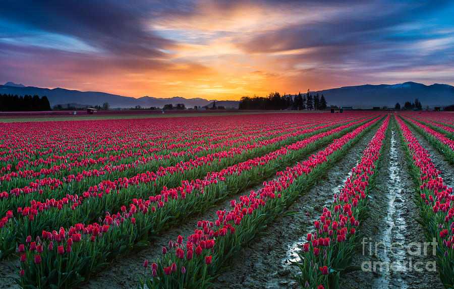 America Photograph - Skagit Valley Predawn by Inge Johnsson