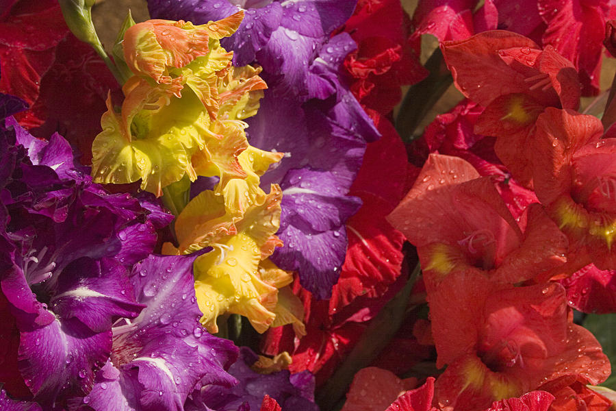Gladiolus Photograph - Skc 4707 Riot Of Floral Color by Sunil Kapadia