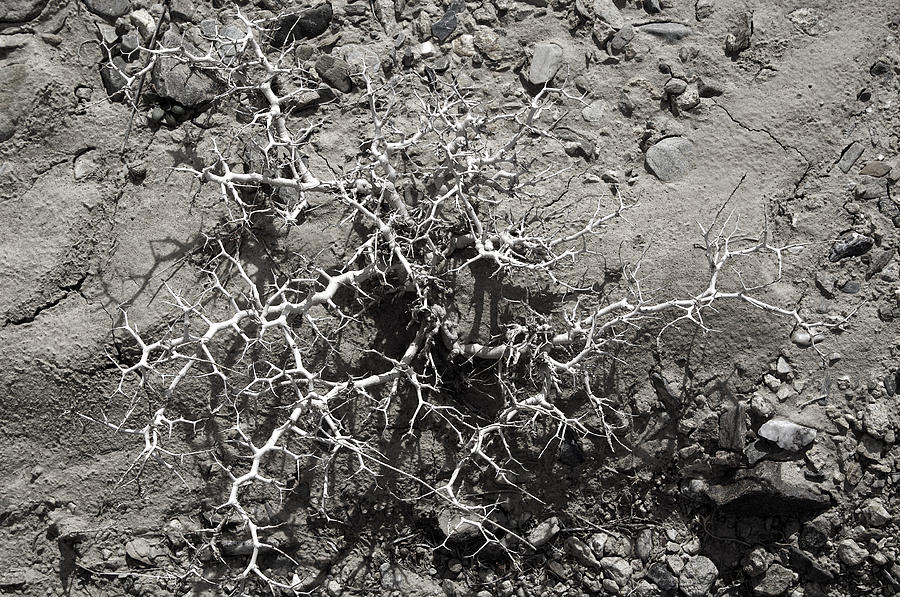 Desert Photograph - Skeletal 1 by A paul Cartier