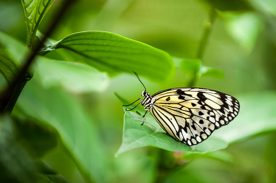 Butterfly Photograph - Skeleton by Paul Johnson