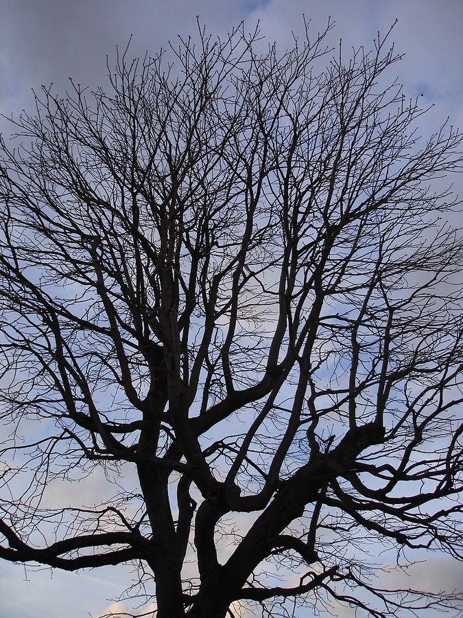 Nature Photograph - Skeleton Tree by Michel Mata