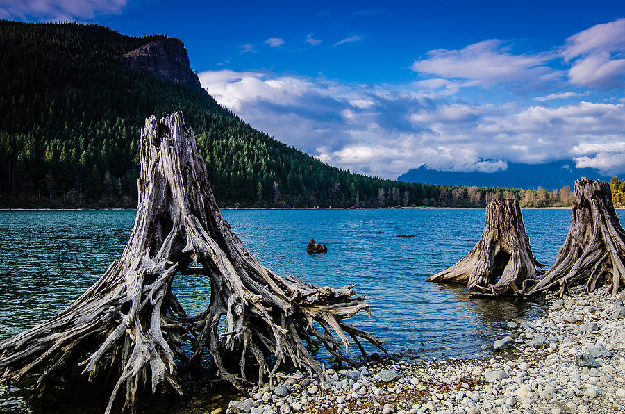 Cascade Mountains Photograph - Skeletons Of The Past by Brian Xavier