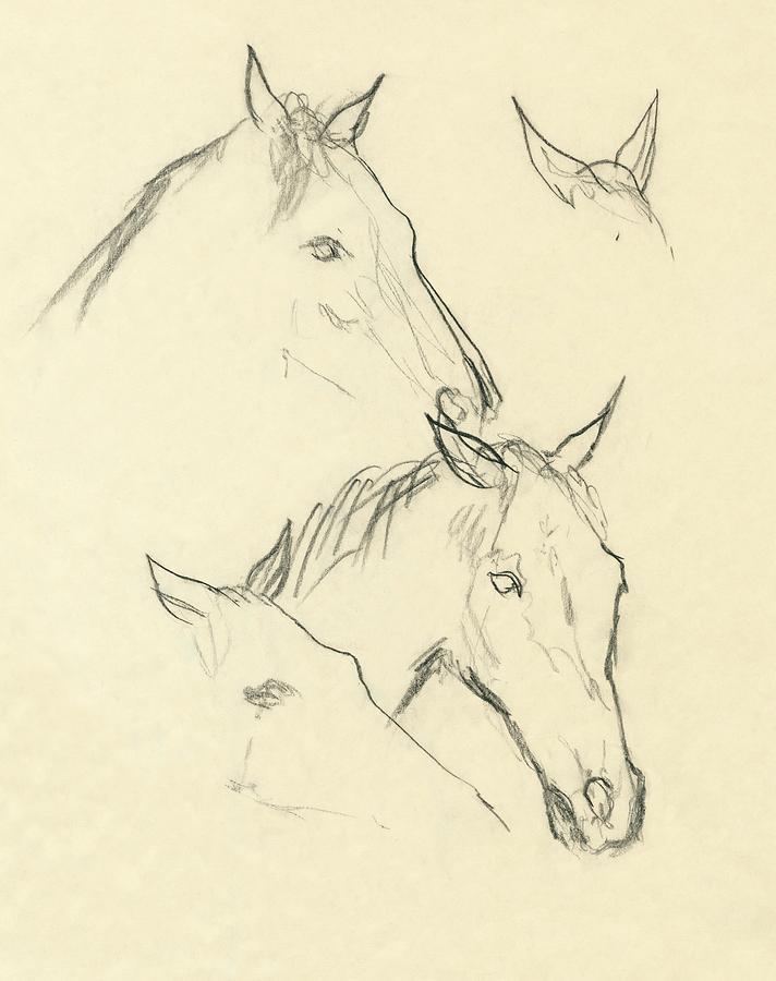 Sketch Of A Horse Head Digital Art by Carl Oscar August Erickson