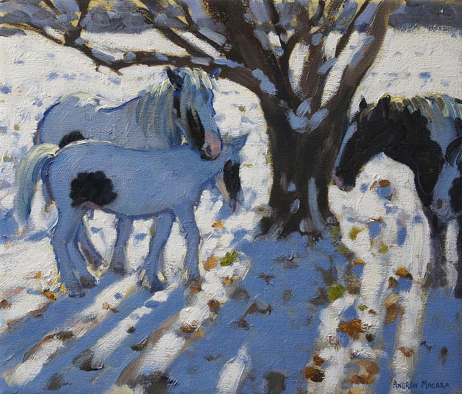 Winter Painting - Skewbald Ponies In Winter by Andrew Macara