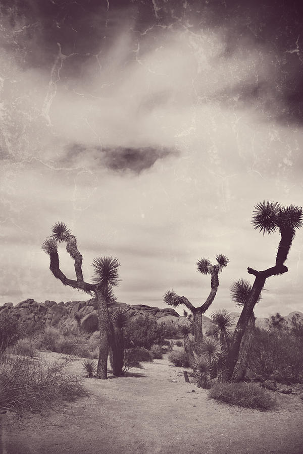 Joshua Tree National Park Photograph - Skies May Fall by Laurie Search