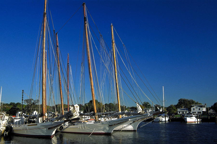 Early Morning Photograph - Skipjacks  by Sally Weigand