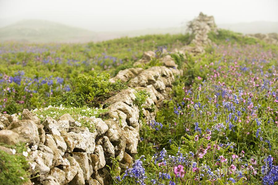 Aquilinum Photograph - Skomer Wildflowers by Anne Gilbert