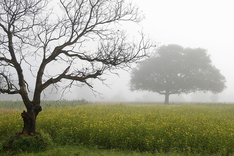 Landscape Photograph - Skc 0058 Contrasty Trees by Sunil Kapadia