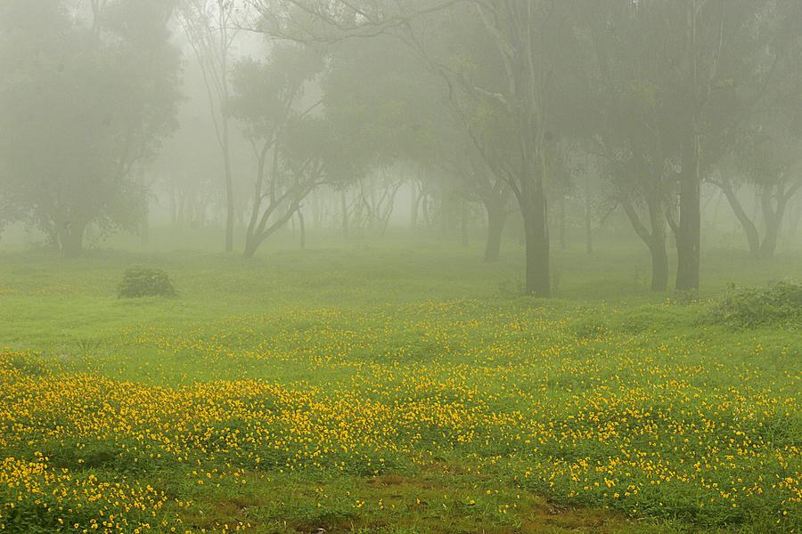 Landscape Photograph - Skc 0835 Romance In The Meadows by Sunil Kapadia