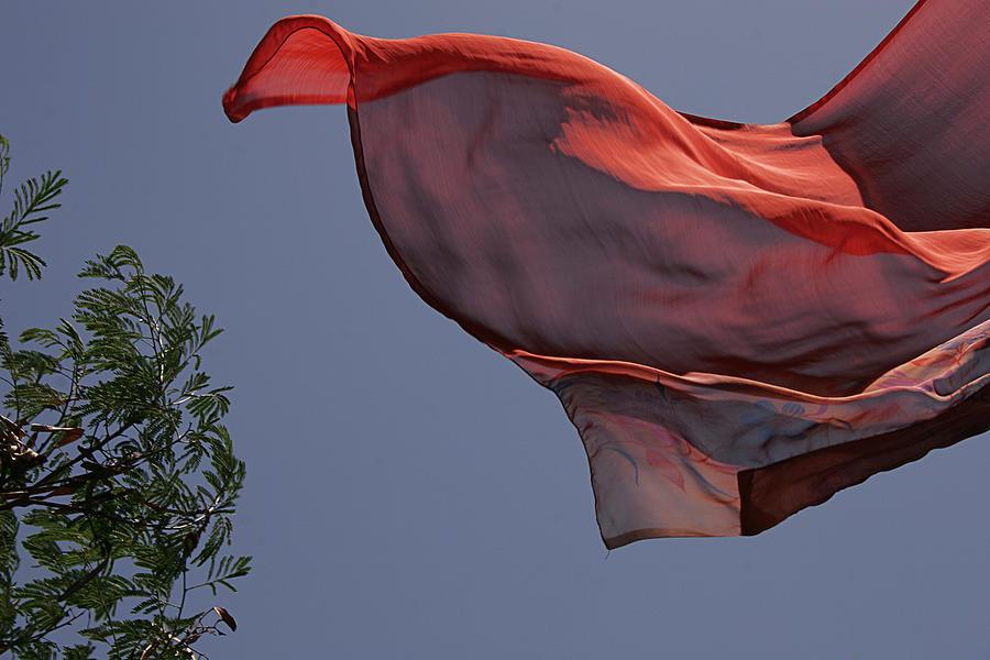 Abstract Photograph - Skc 0958 Flying Saree by Sunil Kapadia