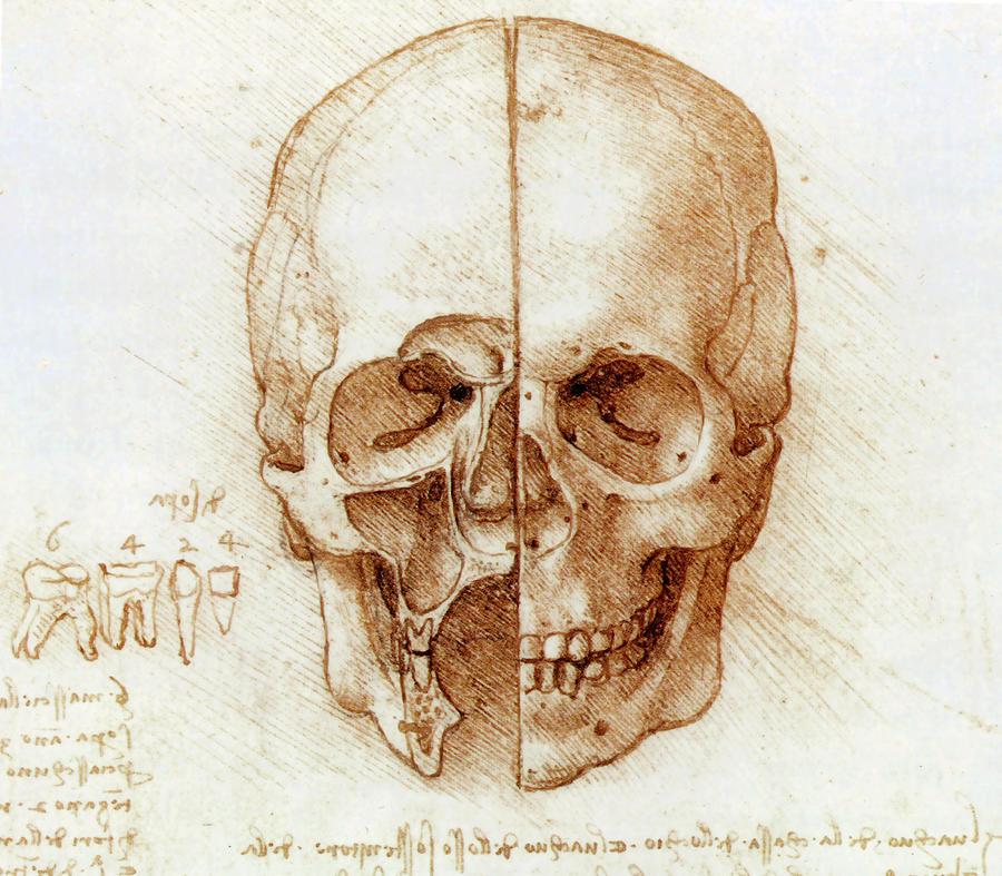 Cranium Photograph - Skull Anatomy By Leonardo Da Vinci by Sheila Terry