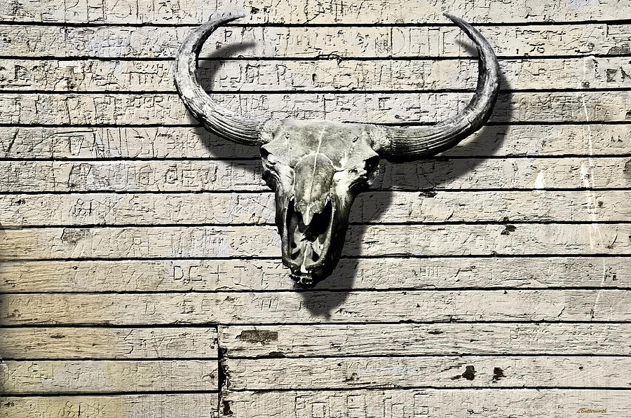 Animals Photograph - Skull And Horns by Larry Butterworth