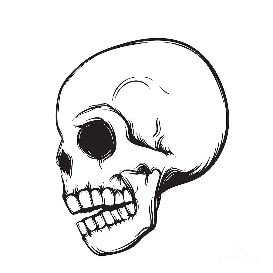 Symbol Digital Art - Skull, Side View, Isolated On White by Nexusby