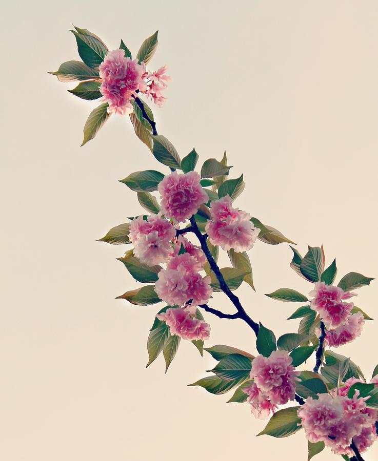 Sky Photograph - Sky Bloom by Candice Trimble