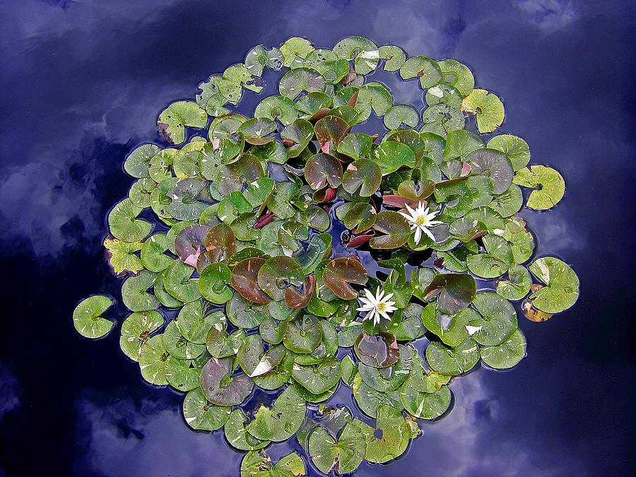 Sky Lilies by Zafer Gurel
