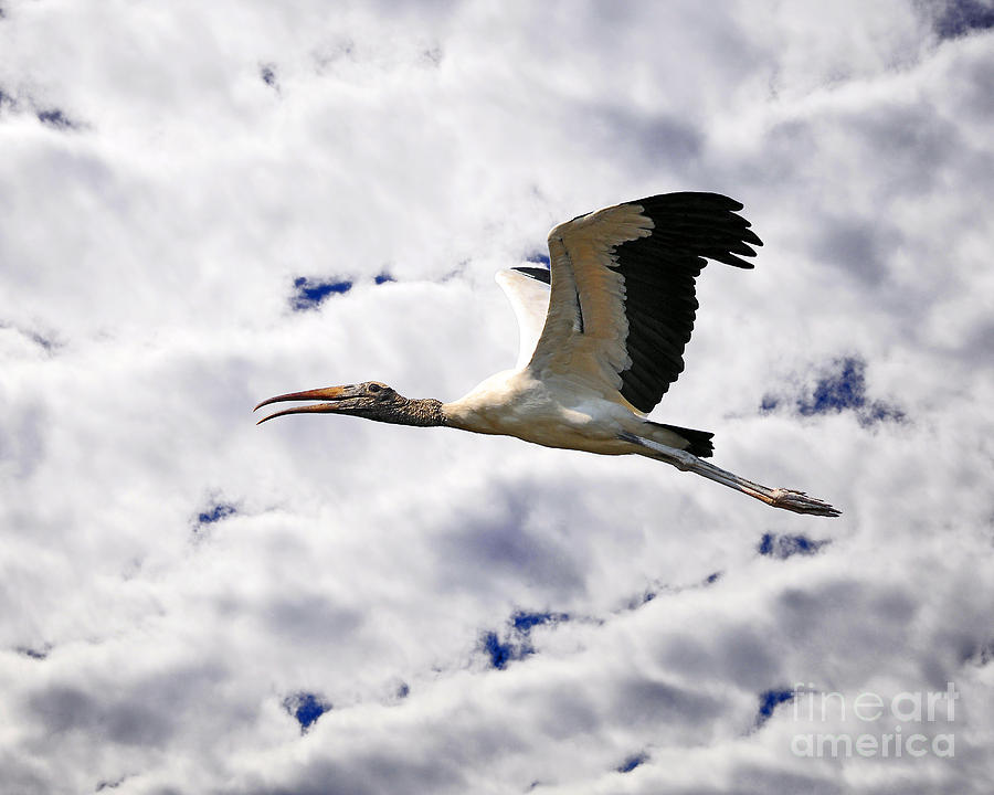 Sky Stork by Al Powell Photography USA