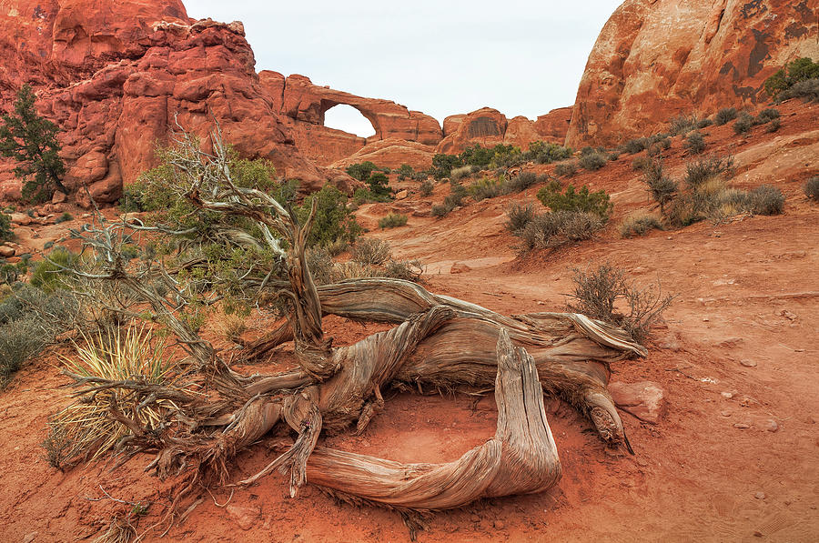 Skyline Arch, Arches National Park Photograph by Fotomonkee