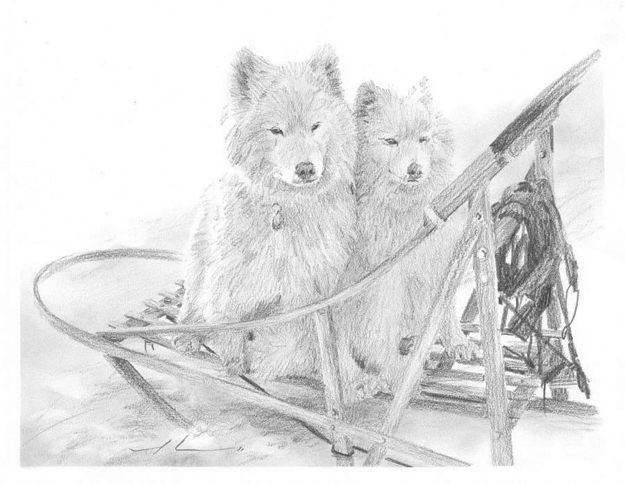 Sled Dogs Riding In Sled Pencil Portrait Drawing by Mike Theuer