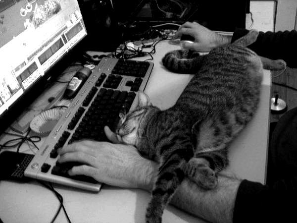 Cat Photograph - Sleeping by Duane Blubaugh