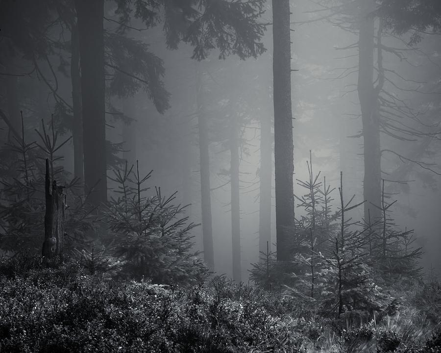 Monochromatic Photograph - Sleeping Forest   by Jaromir Hron