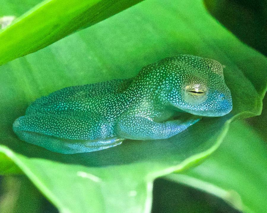 Смешное фото спящей жабы правильном питании