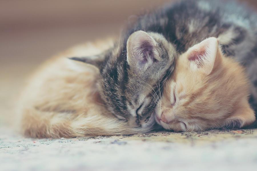 Sleeping Kittens Photograph by Harpazo hope