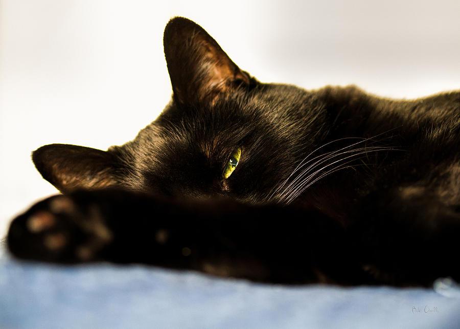 Animal Photograph - Sleeping With One Eye Open by Bob Orsillo