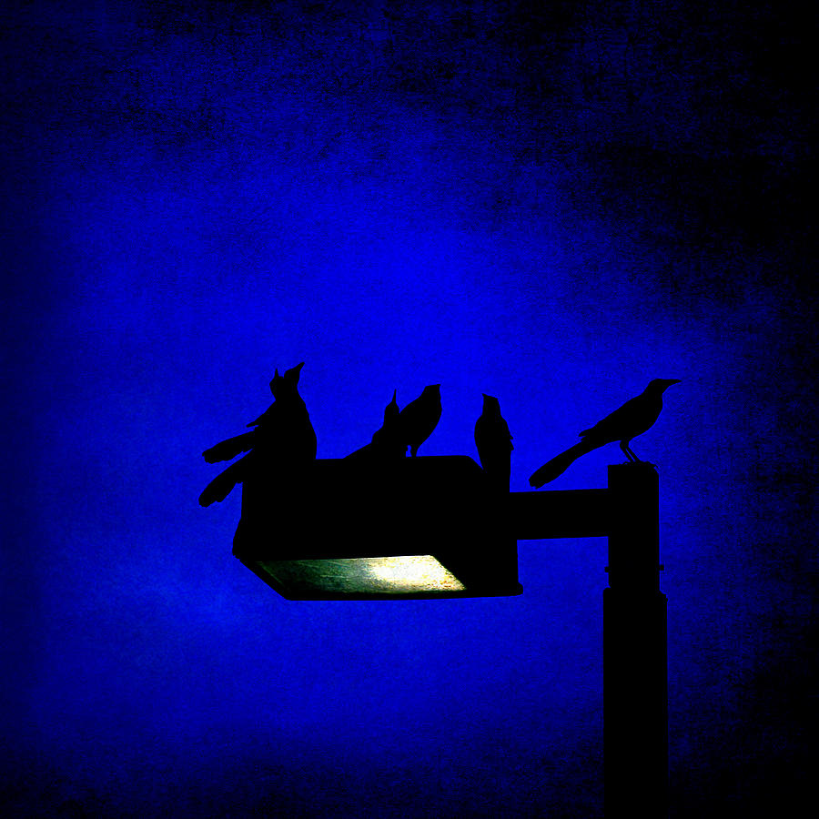 Birds Photograph - Sleepless At Midnight by Trish Mistric