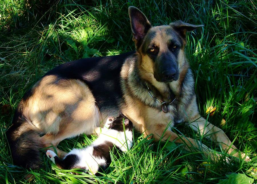 Dog Photograph - Sleepy Friends by Alison Richardson-Douglas