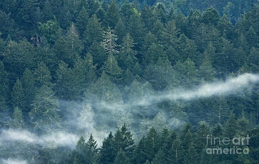 Forest Photograph - Sleepy Morning by Matt Tilghman