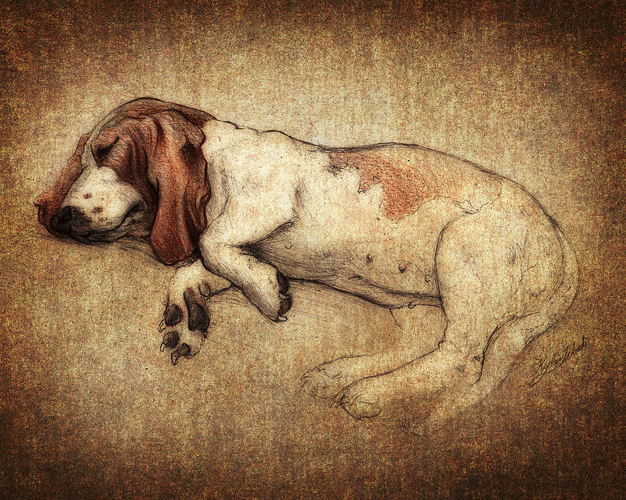 Basset Hound Digital Art - Sleepy Penny by Kyle Wood