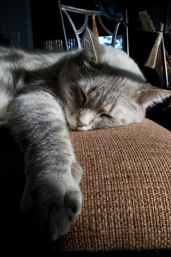 Cat Photograph - Sleepy Time by Matt Radcliffe