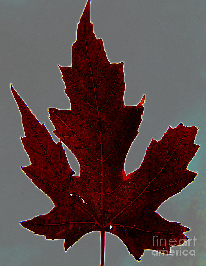 Leaves Photograph - Slender And Pretty by Tina M Wenger