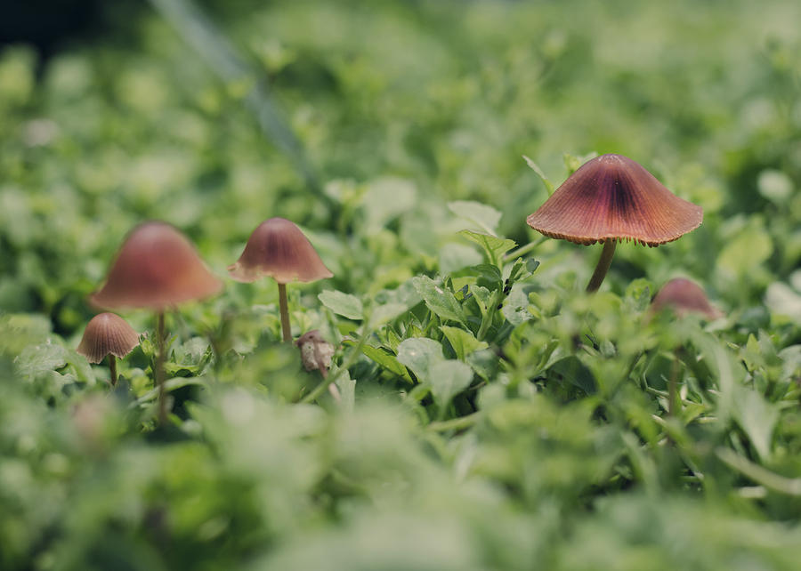 Mushrooms Photograph - Slightly Magical Mushrooms by Heather Applegate