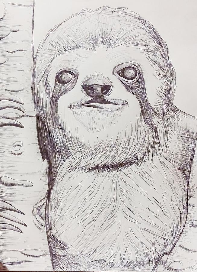 sloth sketch drawing by ashley adams