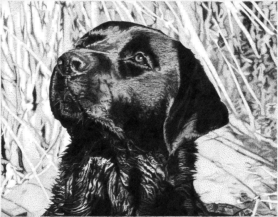 Dog Drawing - Slough Lab by Rob Christensen