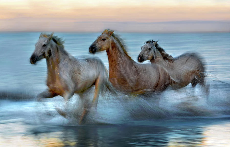 Animal Photograph - Slow Motion Horses by Xavier Ortega