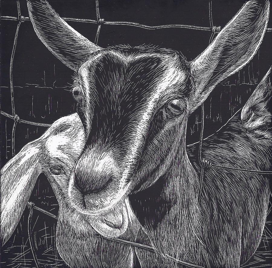 Farm Animals Drawing - Slow Turtle Farm Goats by Jennifer Harper