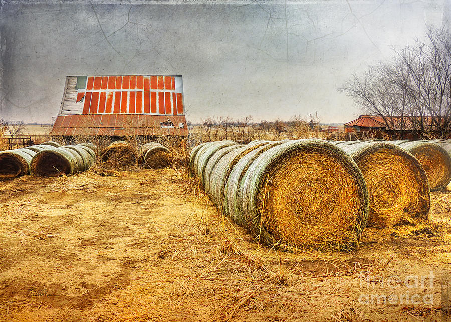 Slumbering In The Countryside Photograph