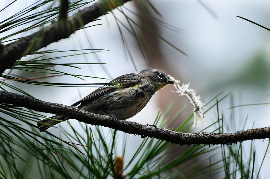 Bird Photograph - Small Bird by Don and Bonnie Fink