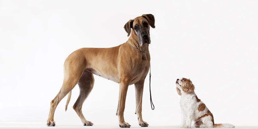 Small Dog Looking At Bigger Dog Photograph by Martin Barraud