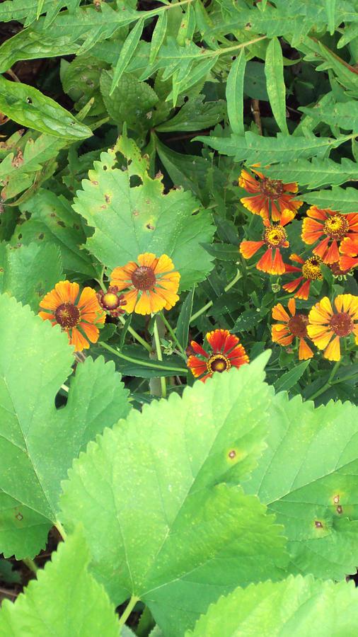 Orange Photograph - Small Flowers by Cynthia Harvey