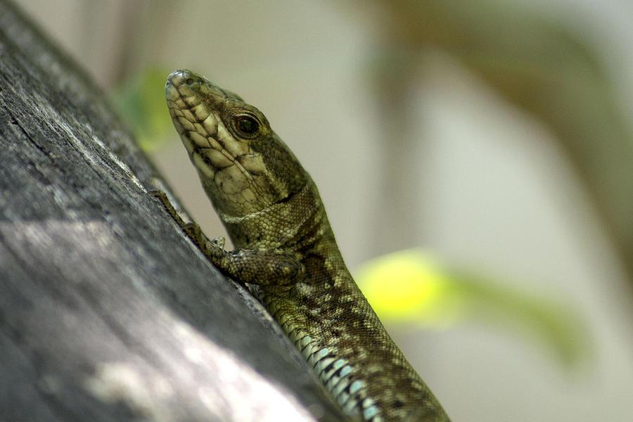 Small Lizard Photograph By Stanislav Tcolov