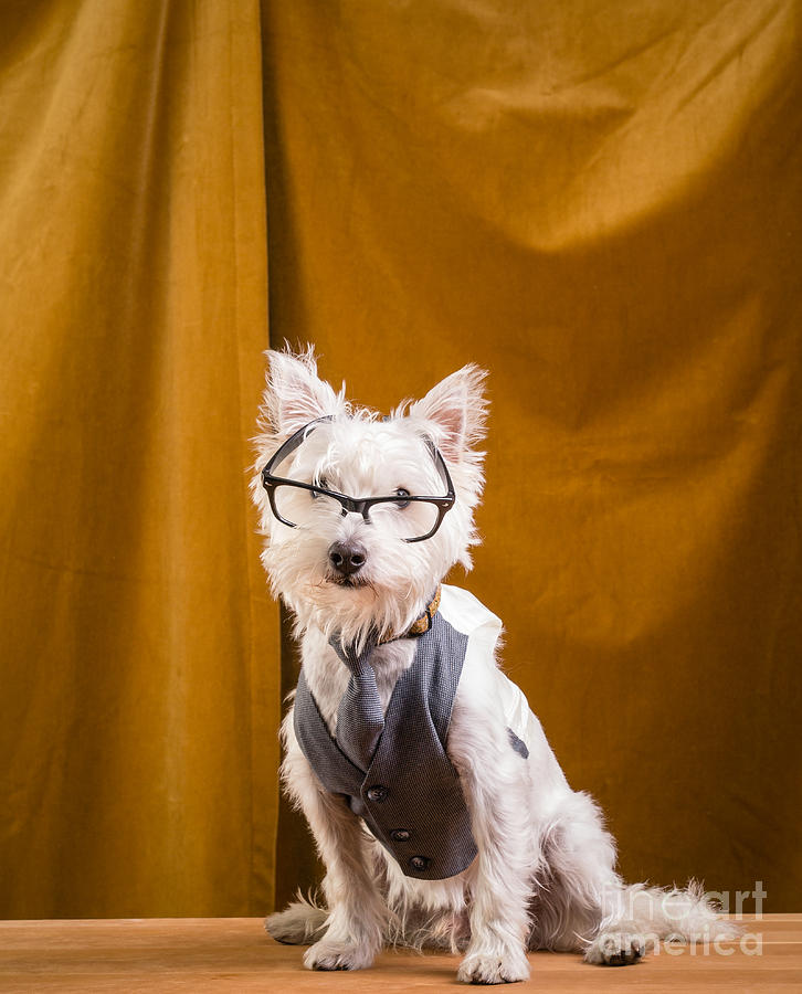 Pet Photograph - Small White Dog Wearing Glasses And Vest by Edward Fielding