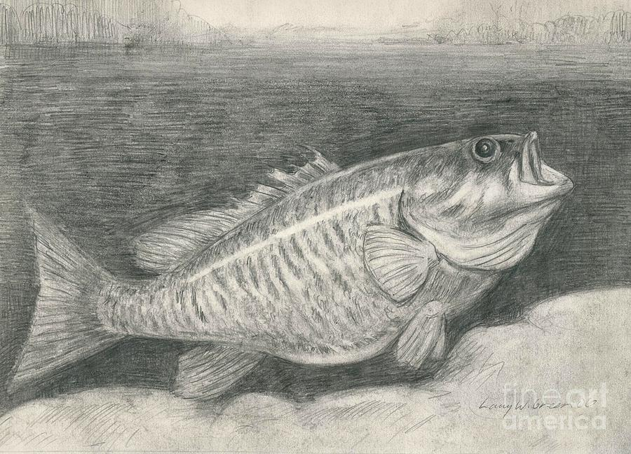 Smallmouth Bass Drawing By Larry Green