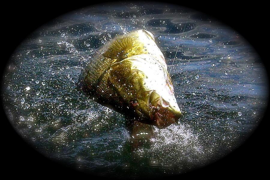 Wildlife Pyrography - Smallmouth Bass by Richard Majeau