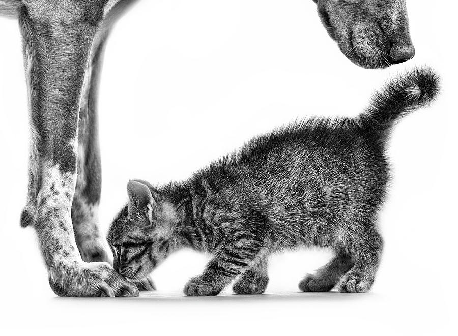 Cat Photograph - Smell Me by Monte Pi (10catsplus)